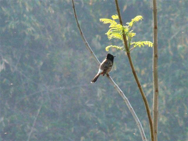 Shinura Retreat – at home with nature